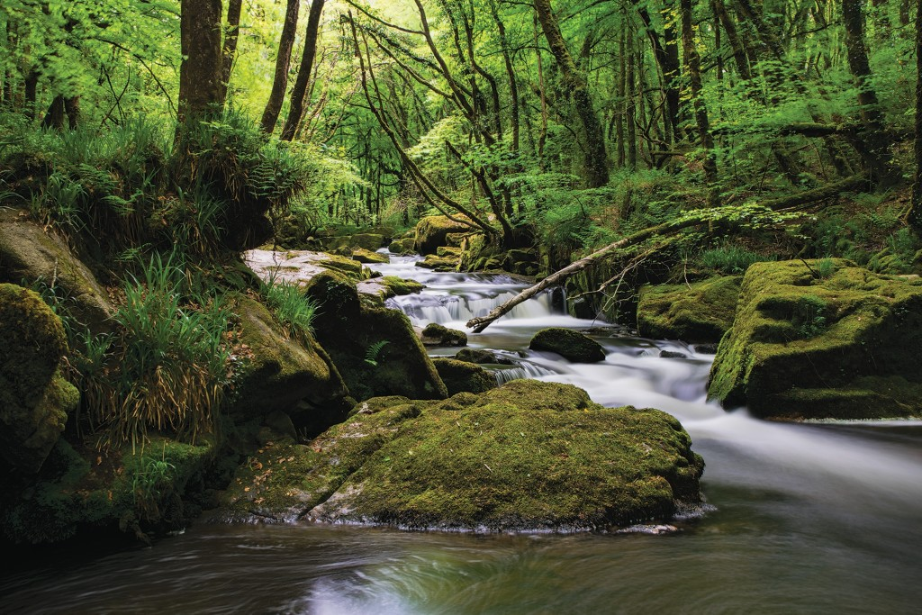 Cornwall in Photographs - Golitha Falls